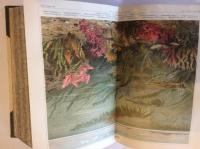 VERKAUFT! Meyers Konversationslexikon-Lexikon, Luxus-Ausgabe, 18 Bände, 5. Auflage, ab 1897