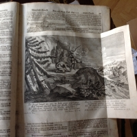 Biblia germanica: Cotta Bibel (Pfaffen) von 1729